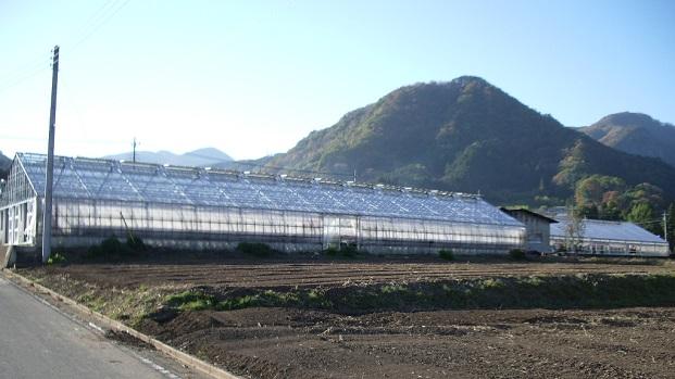 施設園芸で行う花卉栽培や苺栽培する農業