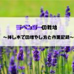 【農業】ラベンダーの栽培(挿し木での増やし方と作業記録)