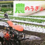 【農業】シクラメン栽培の年間スケジュール