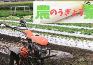 シクラメン-管理-ポイント-種まき-苗おこし-シクラメン栽培の年間スケジュール-施設園芸