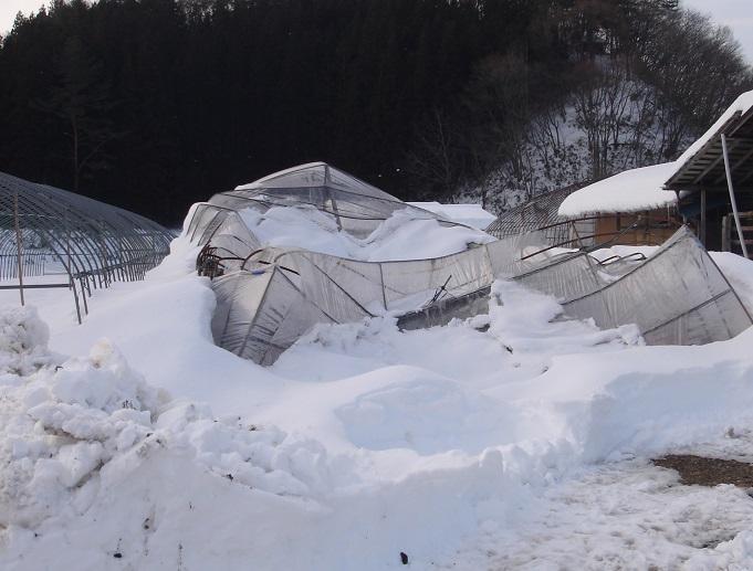 大雪でビニルハウスが倒壊