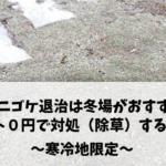 ゼニゴケの駆除は冬場がおすすめ!! コスト0円で対処(除草)する方法 ~寒冷地限定~