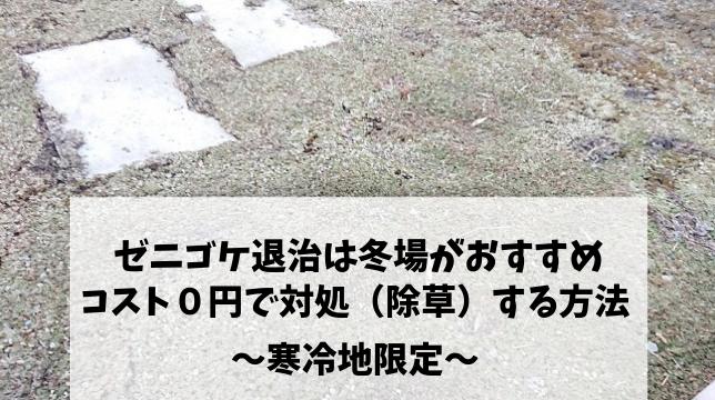 ゼニゴケ退治は冬場がおすすめ!! コスト0円で対処(除草)する方法