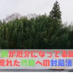 竹藪が厄介になっている話と荒れた竹藪への対処法