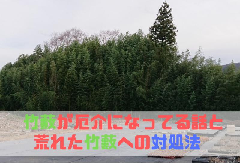 荒れた竹藪への対処法-おすすめの竹の切り方