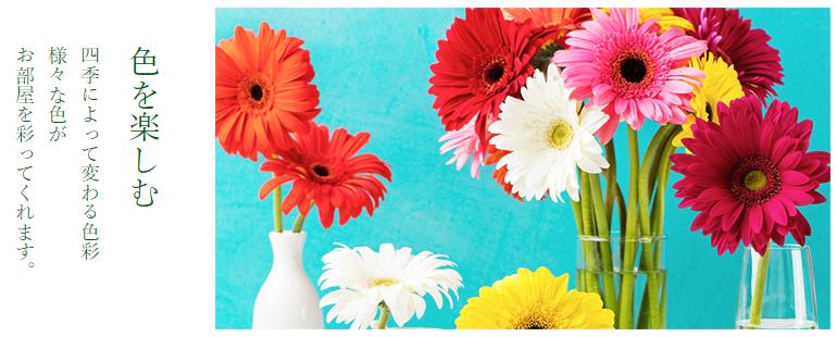 季節の花の定期便_色を楽しむ