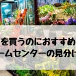 花を買うのにおすすめのホームセンターの見分け方