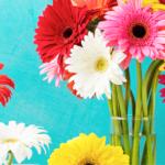 自宅や職場を彩る季節の花を定期的に配送するおすすめサービス 【季節の花の定期便】