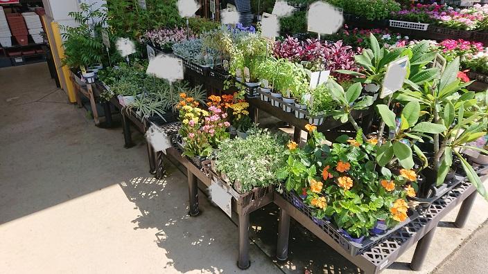 ホームセンター 花の選び方