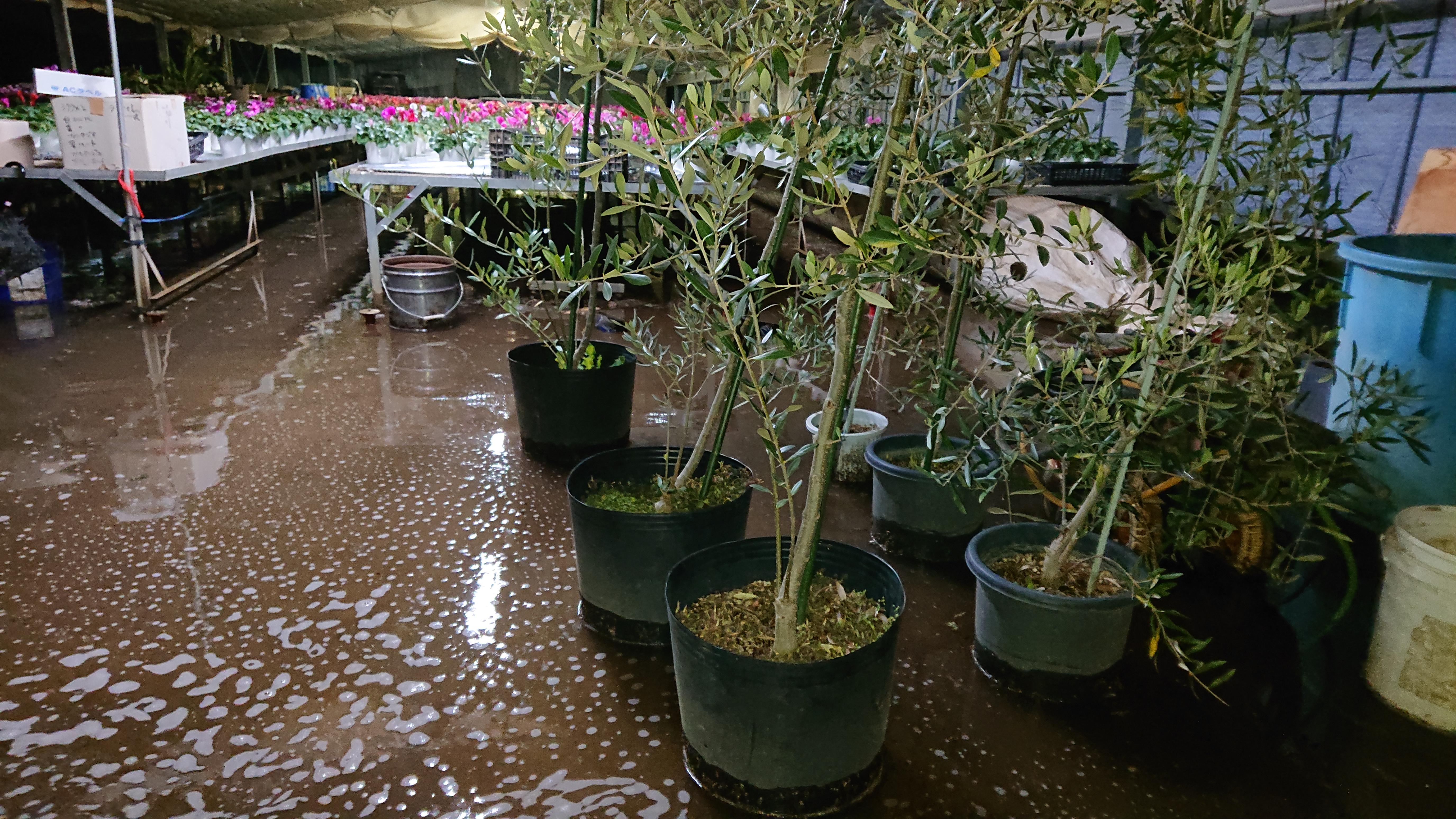 台風19号の被害状況 ビニルハウス浸水