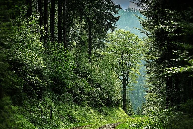 林業の経営形態