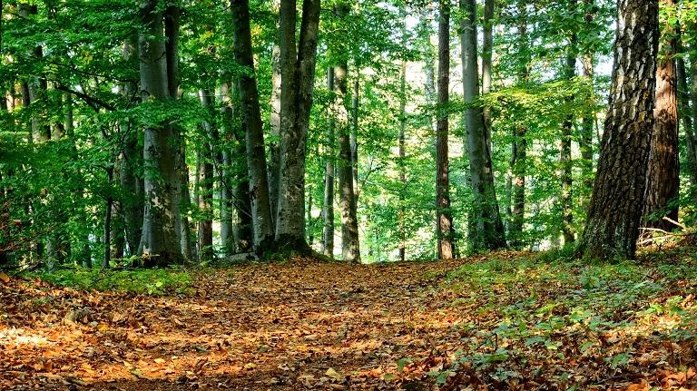 森林(山林)レジリエンス