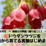 紅ドウダンツツジを種から育てる実験はじめます。 その6 ~ 地植えの準備(掘り起こし) ~
