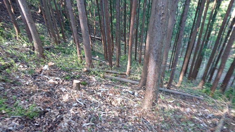自伐型林業_週末林業