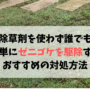 除草剤を使わず誰でも 簡単にゼニゴケを駆除する おすすめの方法